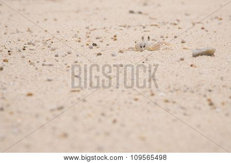 Coral Sand On The Beach In Thailand With Crab And Small Stones