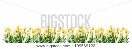 Flower margin design element