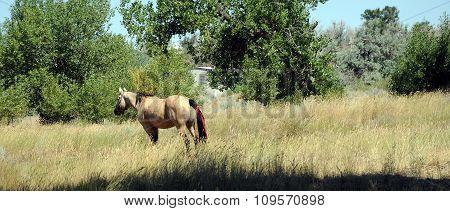 Horse in field.