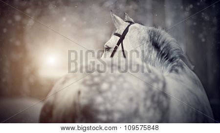 Gray Sports Horse In The Winter