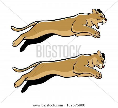 Jumping Cougar