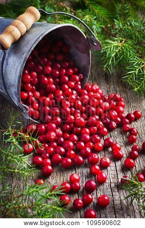 Fresh Cranberry (cowberry) On Wooden Background