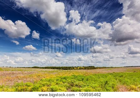 Beautiful sunny day in the field with fluffy clouds. Overcast sky. Ukraine, Europe. Beauty world.