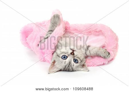 Kitten in  pink fur coat on white background