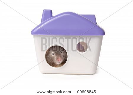 Hamster sits in the lodge. Isolated on the white