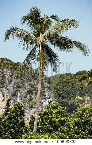 tall palm tree on a background of mountains and blue sky