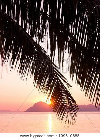 Night is Coming Coconut Horizon