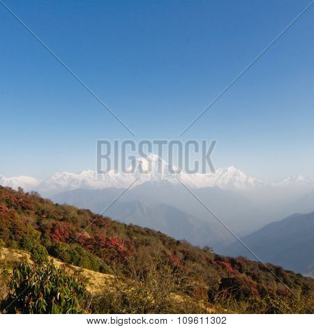 trekking At Poon Hill in Nepal.