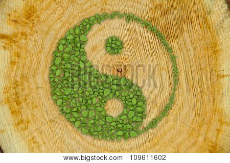 close-up wooden cut texture, background