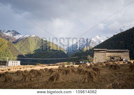 Farm At Yading Village, Sichuan, China