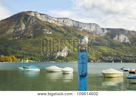 Seagull standing on a blue wooden post in front with Annecy lake and Alpes in background.