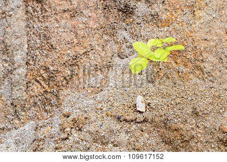 Plant Grow Up On Sand