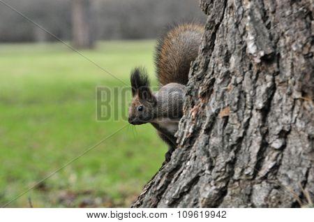 Squirrel. Autumn, November.