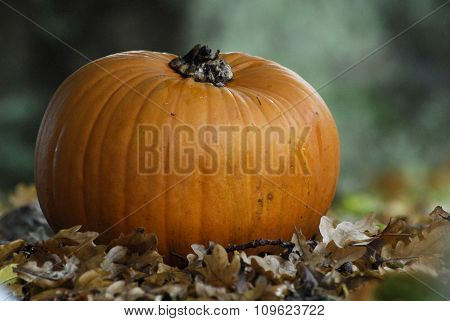 Single pumpkin