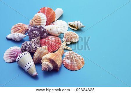 Seashells On Blue Background
