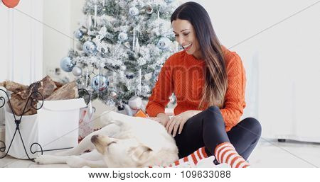 Young woman having fun with her golden labrador dog at Christmas laughing and tickling its tummy in front of the decorated tree