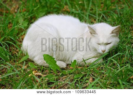 White Cat On Green Grass