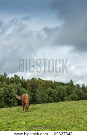 Brown horse on a pasture