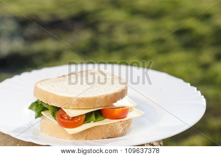 Sandwiches on the plate and green background. Food on a plate