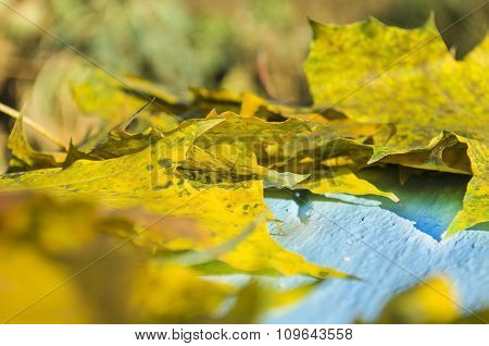 Autumn background with yellow leaves