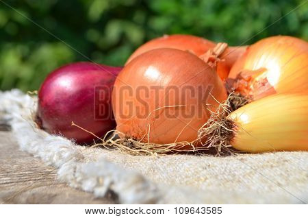 Fresh onions on rustic wooden table.