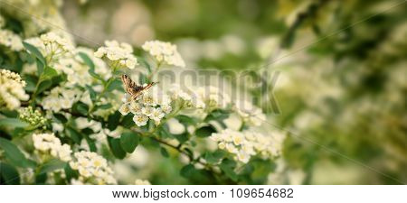 Green Branch With A Butterfly And White Flowers.