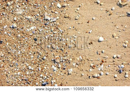 Wet Sand With Crushed Sea Shells In Sunny Day