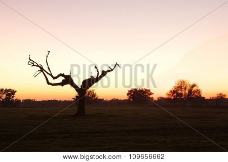Beautiful sunset in the meadow of Extremadura in Spain