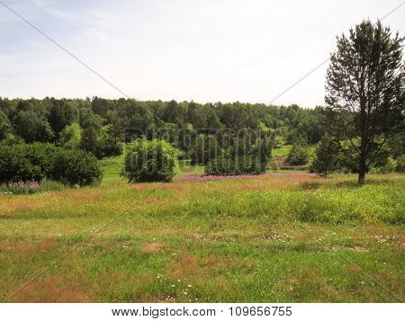 Meadow With Lush Vegetation.