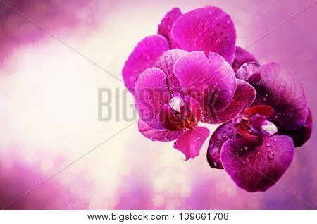 Beautiful pink orchid flower, close up