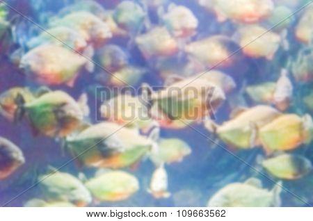 Defocused Background With A Flock Of Piranhas