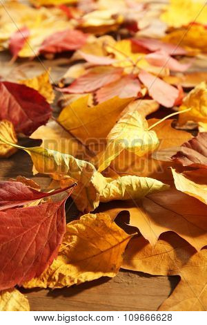 Yellow and brown autumn leaves on wooden table, close-up