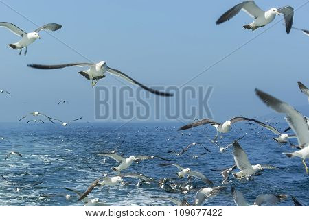 Flock Of Seagulls Flying Over The Ship.