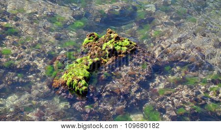 Green: Beach Reef at Cape Peron, Western Australia