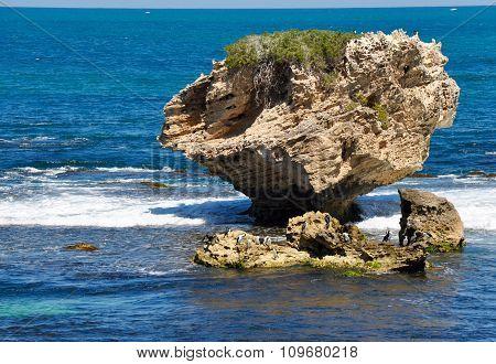 Enormous Limestone Rock with Pied Cormorants: Cape Peron, Western Australia