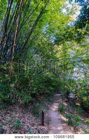 Pathway In The Jungle Surrounded With Bamboo Trees