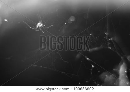 Monochrome Blurry Macro Background Of Cobweb And Spider.
