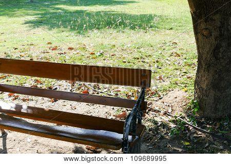 Wooden Bench Under Big Tree