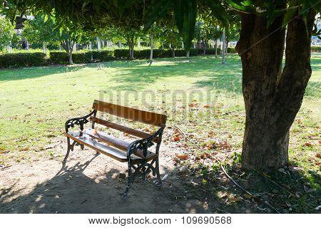 Wooden Bench Under Big Mango Tree