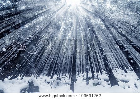 Beautiful Winter Mountains Landscape With Snowy Fir Forest