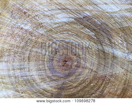 wood felling. age tree circles.textures and background