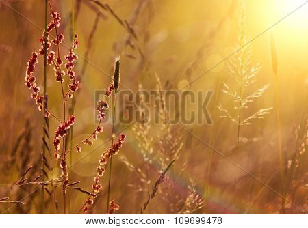 Blooming Grass And Pollen