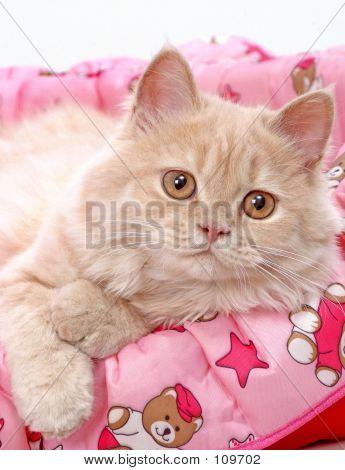 Cat Ginger 02