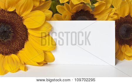 Photo Of Blank Card Among Sunfliowers