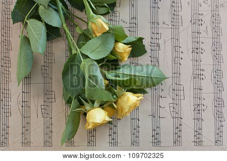 Tender Yellow Roses On Page Of Vintage Sheet Music