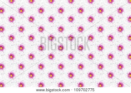 White Chrysanthemum Flower With Yellow Center Pattern Background