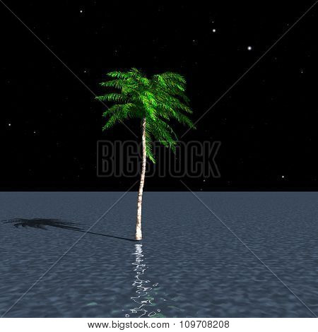 Lonely Palm Tree Growing