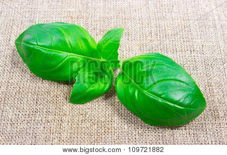 Green Fresh Basil On Canvas Background.