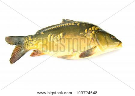 Healthy and Diet Food: Fish Carp.