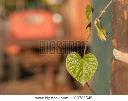 Green Vine And Truck